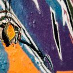 Graffitiwand mit Birdly Schmuck